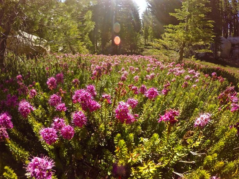 Wildflowers were in bloom
